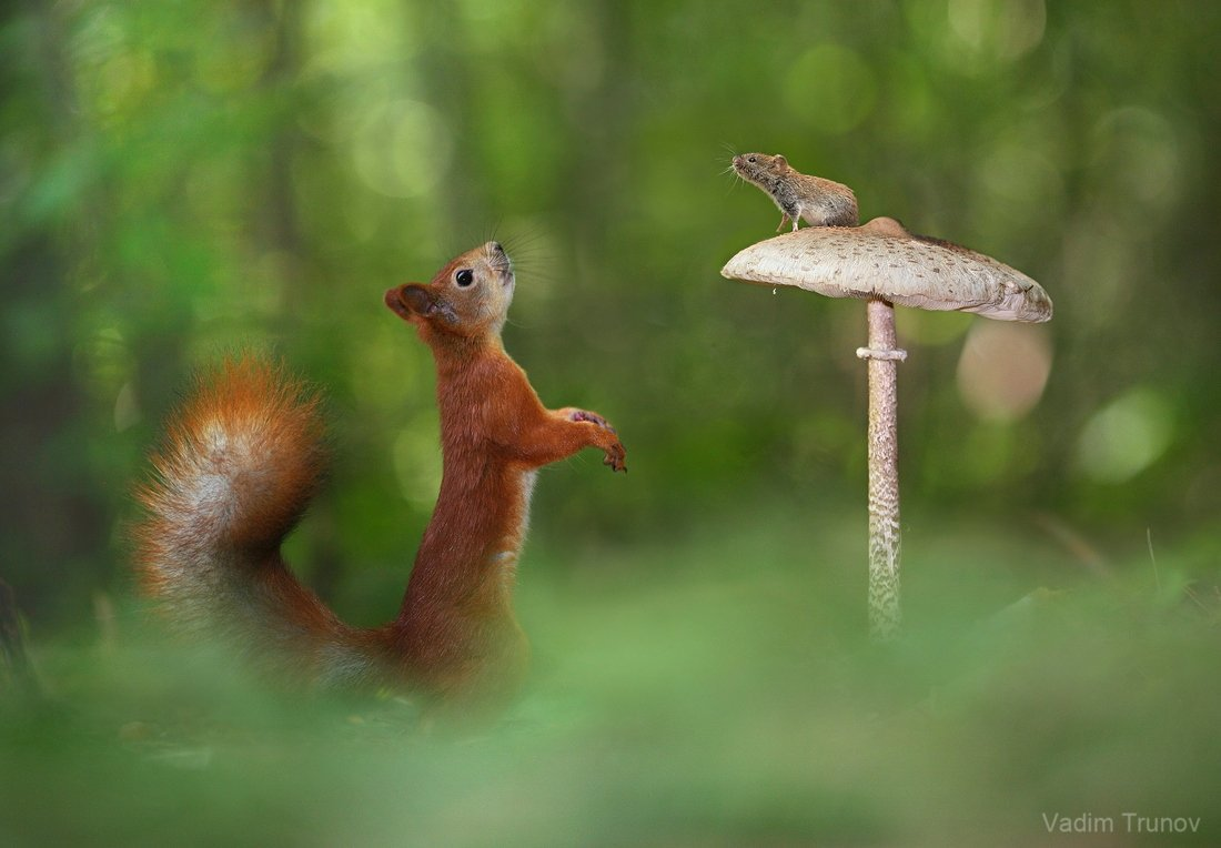 One moment from forest life ..    ***  by Vadim Trunov.  #HappyWeekend <br>http://pic.twitter.com/tmAl1FA0lN