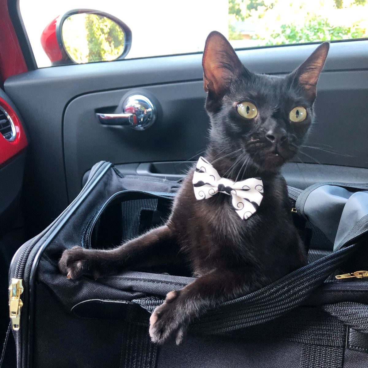 Weekend time! Who is ready?  #CatsOfTwitter #catsofinstagram #kitty #pet #cutecats #adventurecat #bowtie #catstagram #kittycat #meow #FridayThoughts #readyfortheweekend<br>http://pic.twitter.com/TAX4JeDiMr