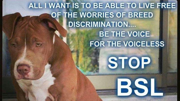 Pit Bulls Against Discrimination (@pitbullsad) on Twitter photo 2019-08-17 15:57:58