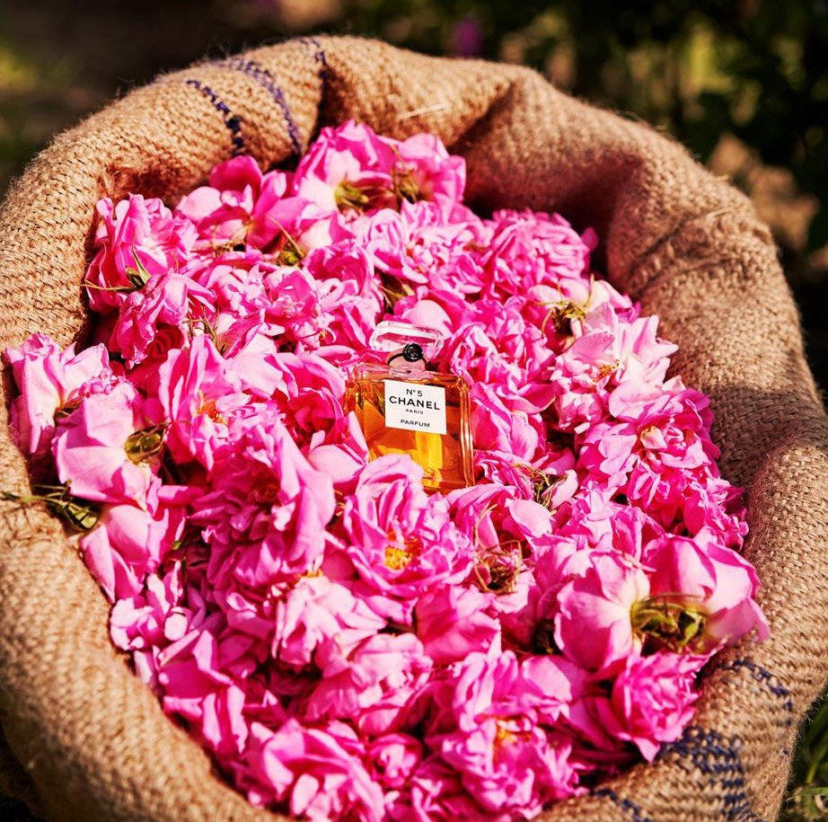test Twitter Media - Turns out the secret behind Chanel No. 5 is.. #biodynamic roses! https://t.co/AMuL7E3Xkv https://t.co/iHOCNKVhom