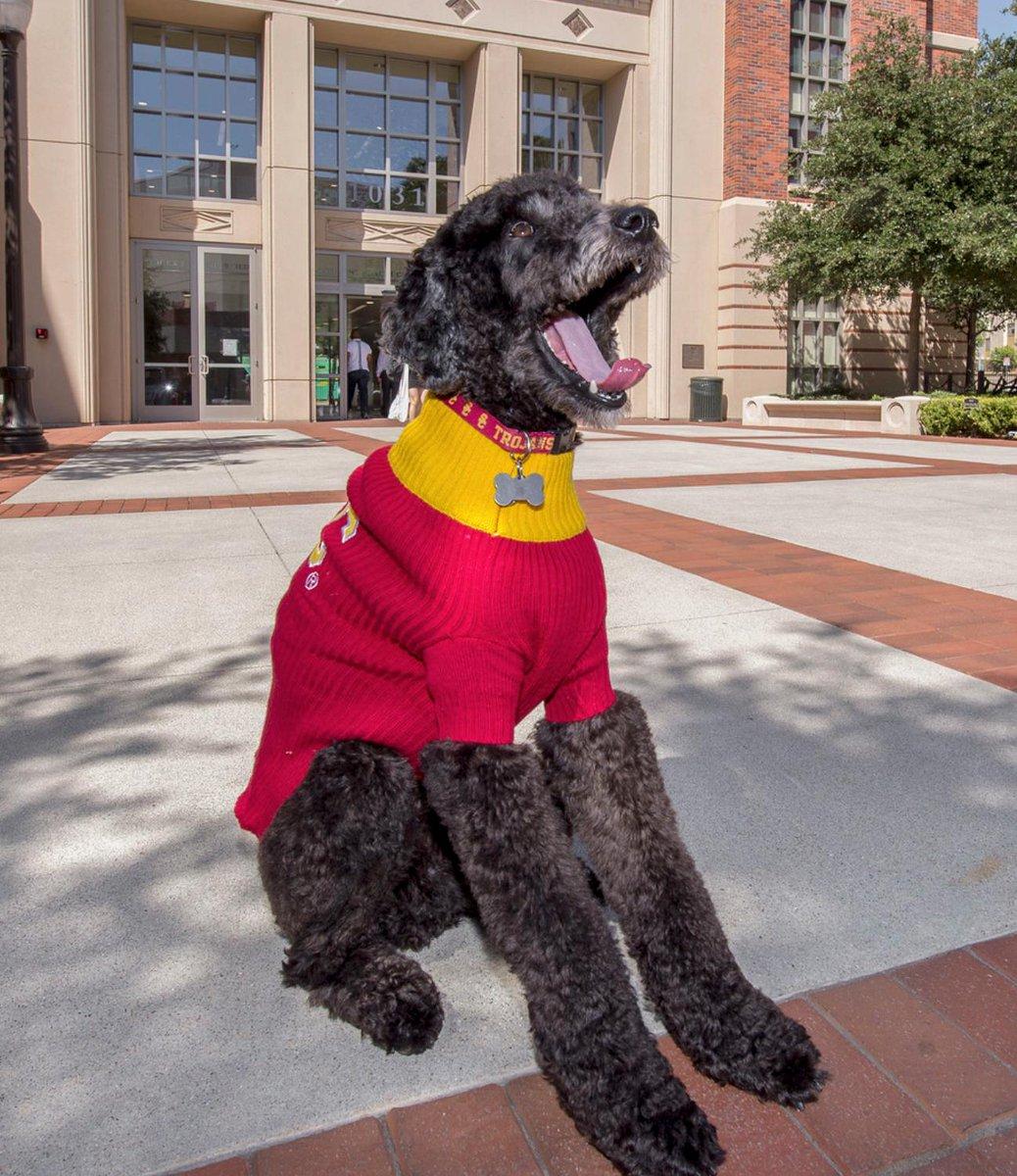 Professor Beau is our official wellness dog! https://t.co/TJbZ88HNGu