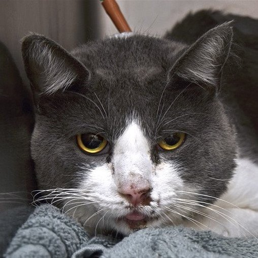https://www. facebook.com/ACC.OfficialAt RiskAnimals/photos/a.514584542416415/514585275749675/?type=3&theater  …   https:// newhope.shelterbuddy.com/Animal/List      *LARRY* >NOT Reserved< (High Rise Fall) Darling Sweet Larry Needs a Medical Foster He Needs Vet Care & TLC SAVE LARRY TBD 8/17/19!!!! Adopt/Foster/Pledge Killing at12PM #NYC  Fostering/Vet>FREE   http://www. nycacc.org/get-involved/n ew-hope/nhpartners  … <br>http://pic.twitter.com/SKEPY3Wd76