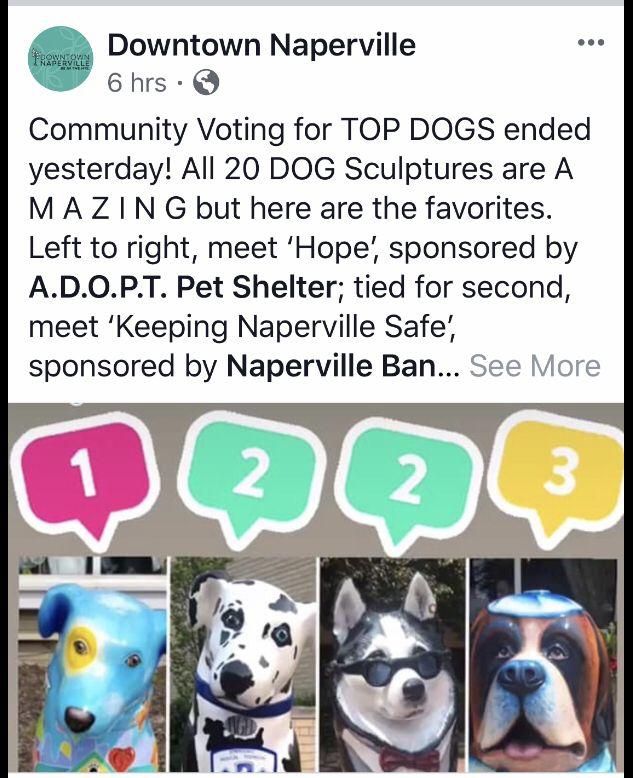 ADOPT Pet Shelter (@ADOPTPetShelter) | Twitter