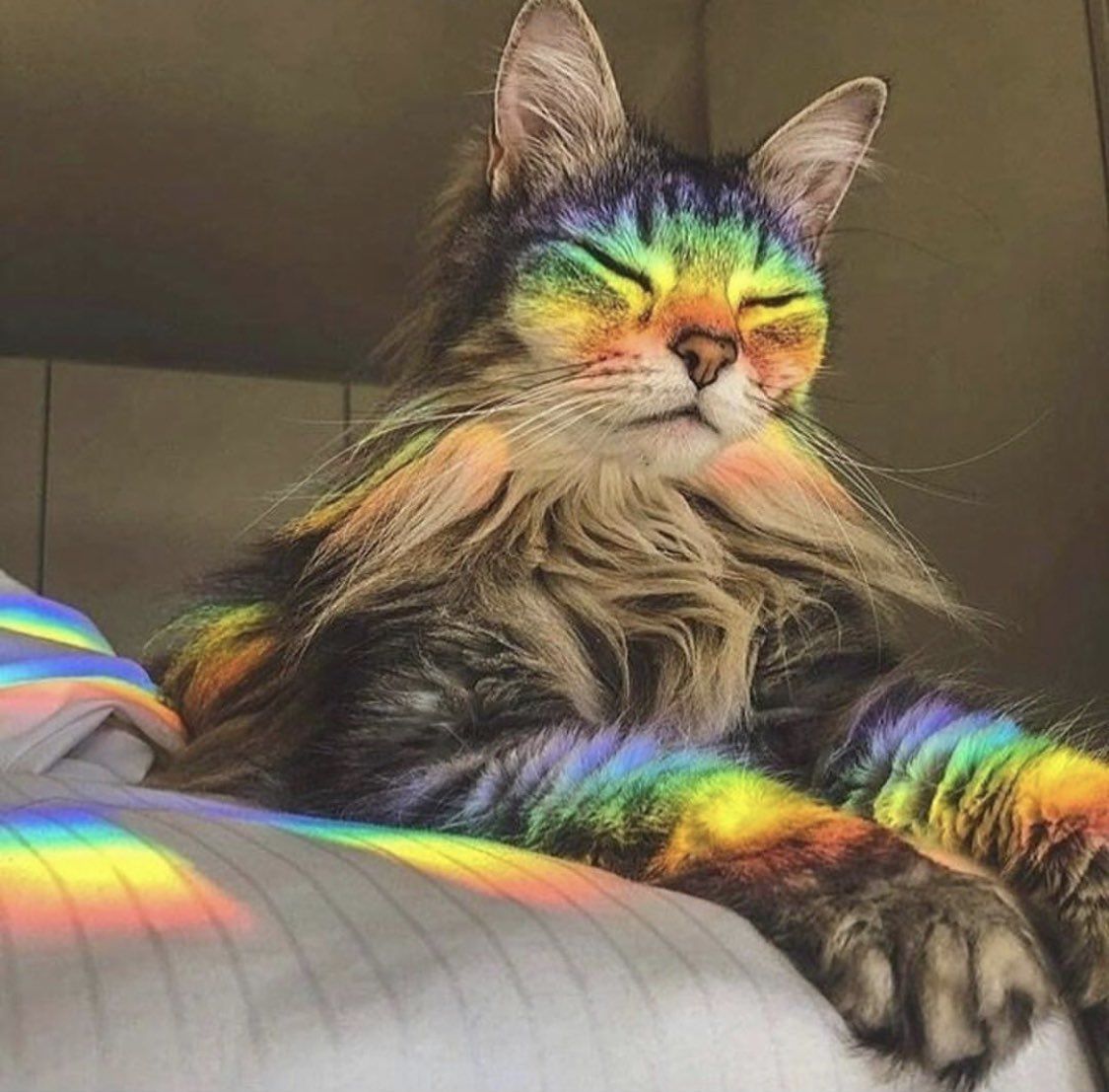 Friday (feline) Feels  May your weekend be full of sunshine and rainbows! #rainbowkitty #fridayvibes Drop your favorite feline emoji in the comments if this is what you feel like on Fridays!   @wang_ziyuu  via @refinery29<br>http://pic.twitter.com/bXnVUlsi1b