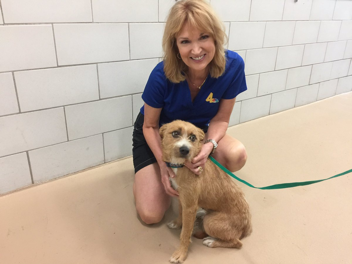 Sweet Honesty is up for adoption @NashAnimalCare All adoption fees are waived tomorrow from 10am to 4pm. #ClearTheShelters @wsmv