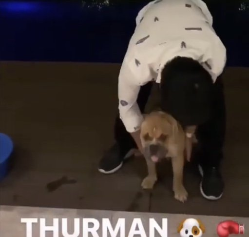 🤣🐶 Manny Pacquiao has bought a new dog and named it after Keith Thurman. [🎥 @MannyPacquiao]