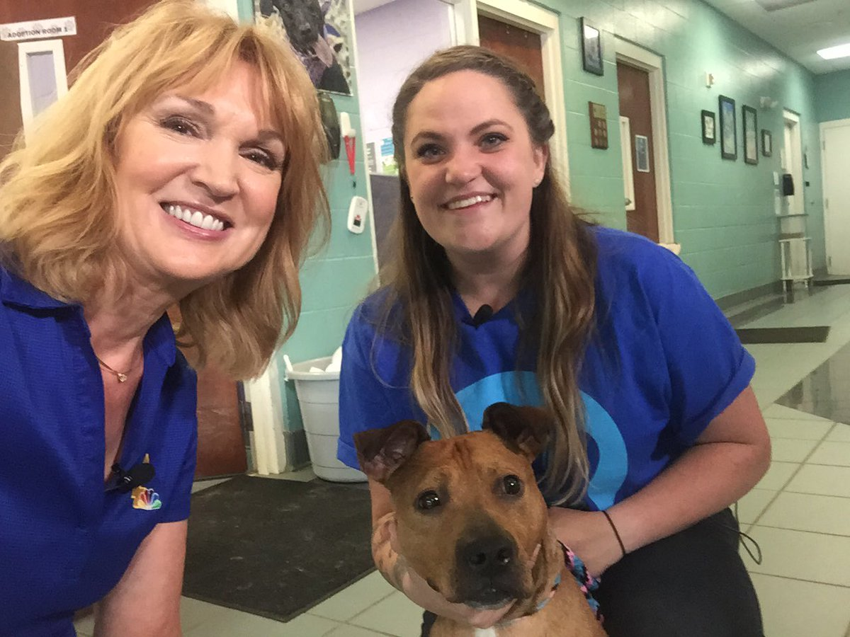 You can take home this guy, Reggie White at the #ClearTheShelters event tomorrow 10am to 4pm @NashAnimalCare Adoption fees waived. @WSMV