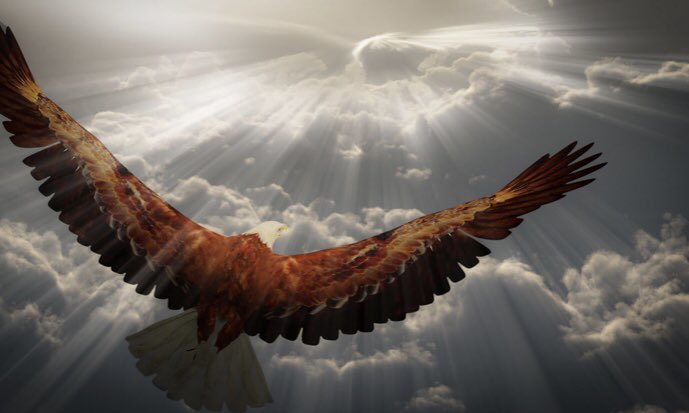 Eagles Rise Up   Eagles keep rising  even when there's  a storm.  So don't let a few  clouds ruin your  day,  & fly like an eagle  no matter what  comes your way.  There is no better  way than up, Up, & away.  Nothing can stop u.  Let your soul light  the way!  M.K #StarfishClub <br>http://pic.twitter.com/6oQcvXv0Ch