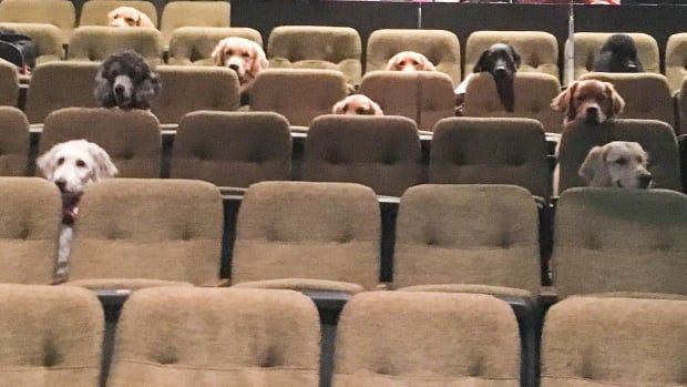 Adorable photo of dogs attending a Stratford performance takes off online - CBC cbc.ca/radio/q/blog/a…