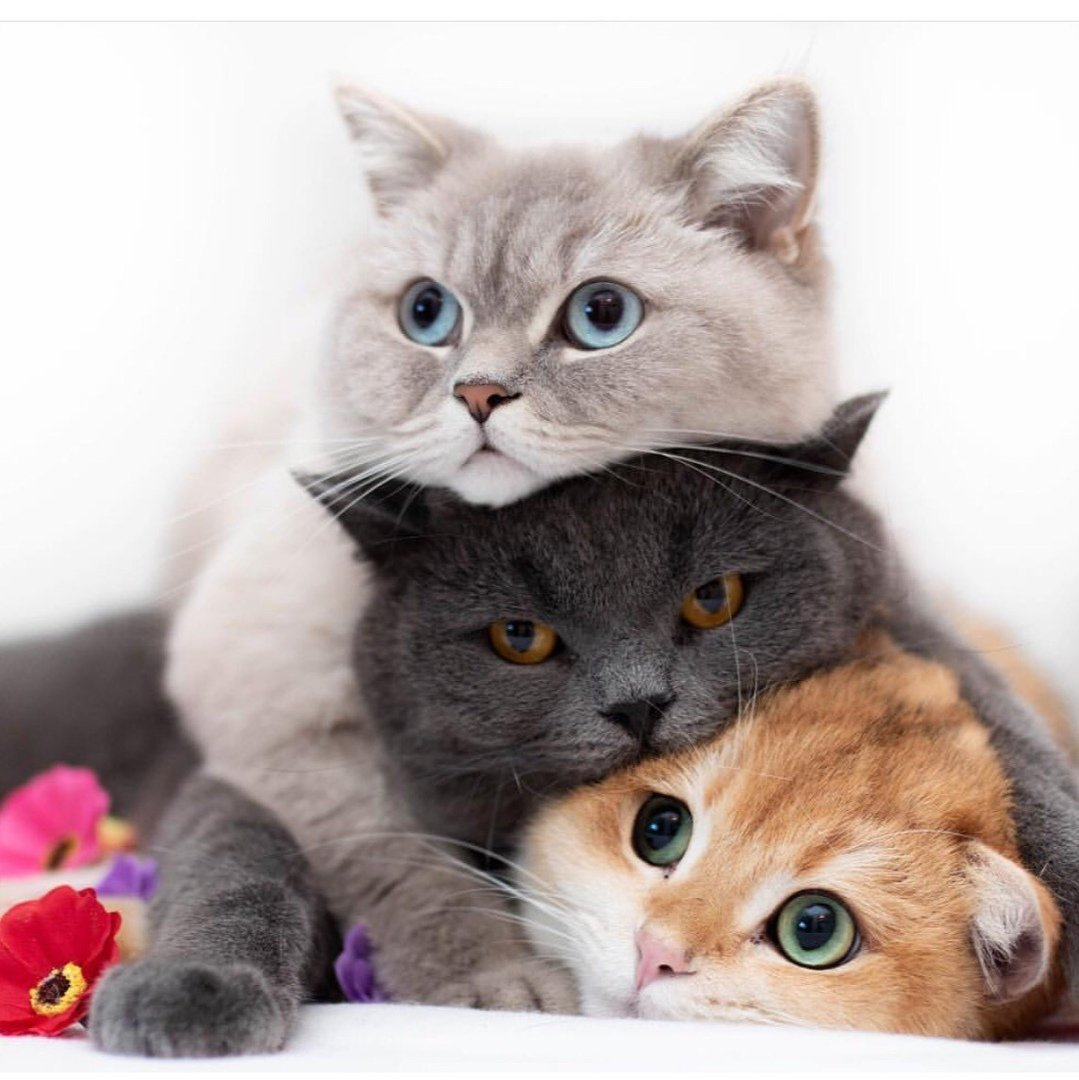 Cat magnet Fun time #CatsOfTwitter #catslife #catlovers #HappyDays #HappyWeekend #SmileMore<br>http://pic.twitter.com/zGCe1TVdLQ
