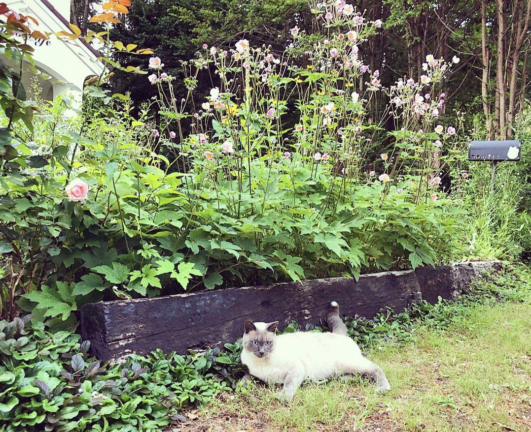 いっとき警報が出ていた厚真だけれど、いつもと変わらない今日を過ごすことが出来ました。(๑φﻌφ)お庭の花達もきれいなまま嵐を乗り越えてくれました。