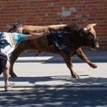 Image for the Tweet beginning: Los encierros están concentrando a