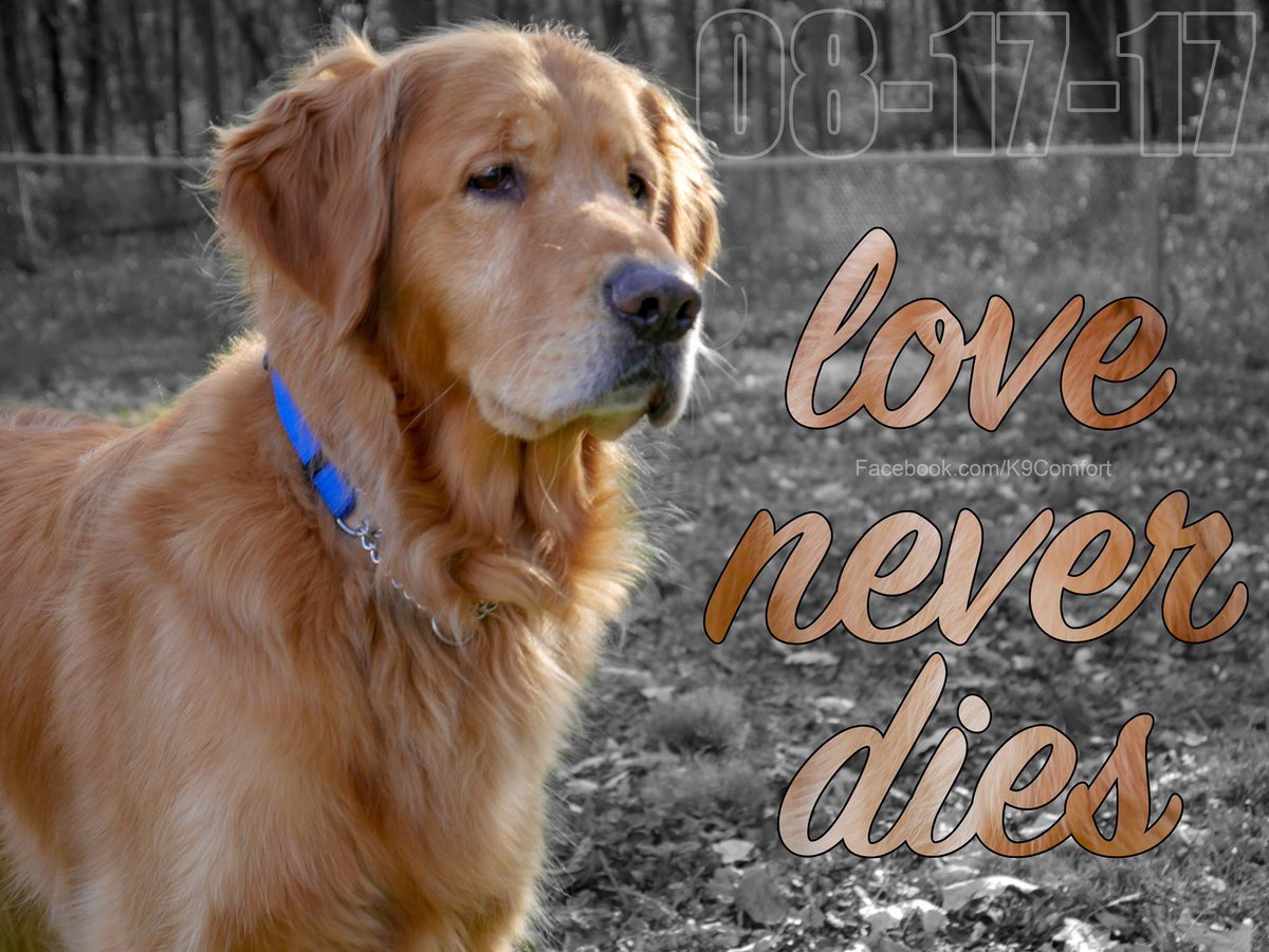 It's been two year since you passed, Luther, but it still hurts. You were such a wonderful ambassador of love and compassion. You left an indelible mark of beauty on this world, buddy. Thank you for all you were and all you did. We miss you so much.
