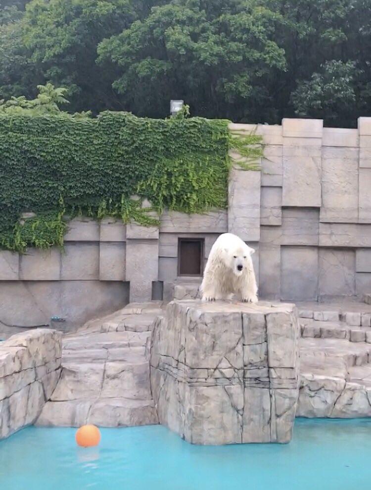 昨日は円山動物園にも行きました!動物達が可愛すぎて雨の中、大はしゃぎしていまいました( ⁎ᵕᴗᵕ⁎ )最高の癒しです。♢エリイより♢