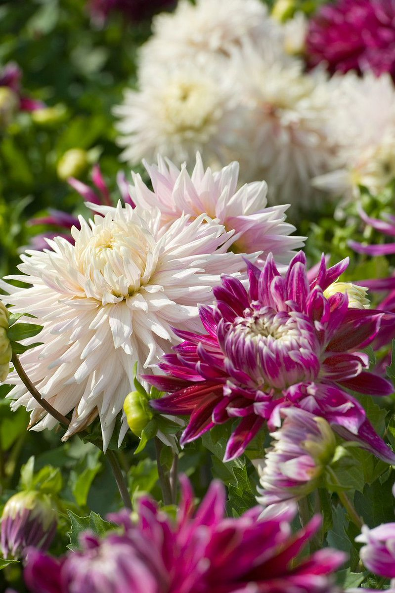 Weekend vibes!  #weekendvibes #SaturdayMotivation #LoveFlowers<br>http://pic.twitter.com/kZemWn7GWw