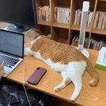 猫と暮らす。猫と暮らすなら、広いデスクの大切な場所も猫ちゃんに譲ってあげる広い気持ちが必要なんですね。