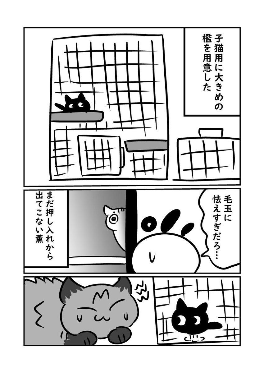 子猫が来た話 子猫に逃げ惑う上二匹です #ぬら次郎日記