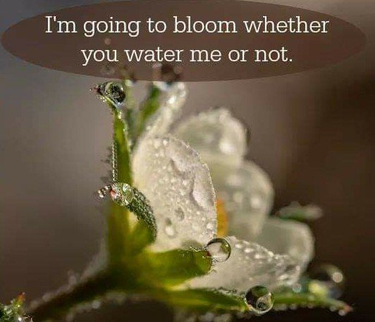 I'm Going To #Bloom Whether You Water Me Or Not.  #AttitudeMatters #inspiringquotes #BeTheChange  #waytolive #lifecoaching  #FamilyTrain #JoyTrain  #ThinkBIGSundayWithMarsha<br>http://pic.twitter.com/lGEAI4xU9j