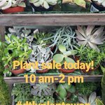 Image for the Tweet beginning: Plant sale today! $1.00 plants