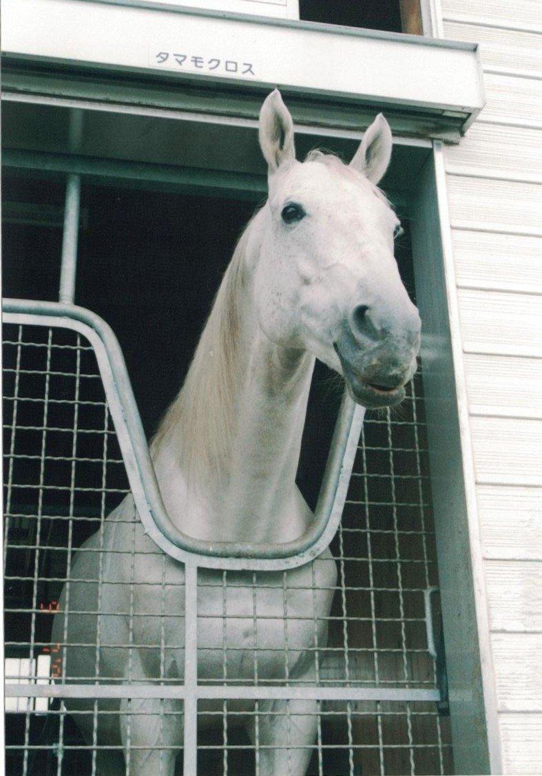 #おうまのじゆうけんきゅう  競走馬の引退後のお仕事(種牡馬さん)🐴  #タマモクロス #セイウンスカイ #サクラローレル