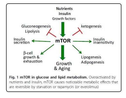 diabetes rapamicina sirolimus