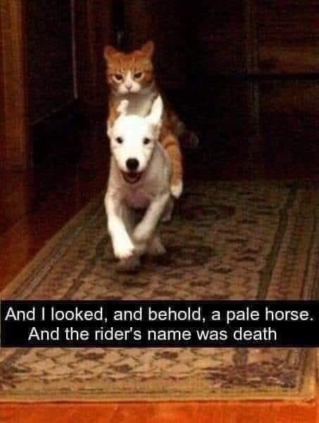 Prepare to face your judgement in pawgatory
