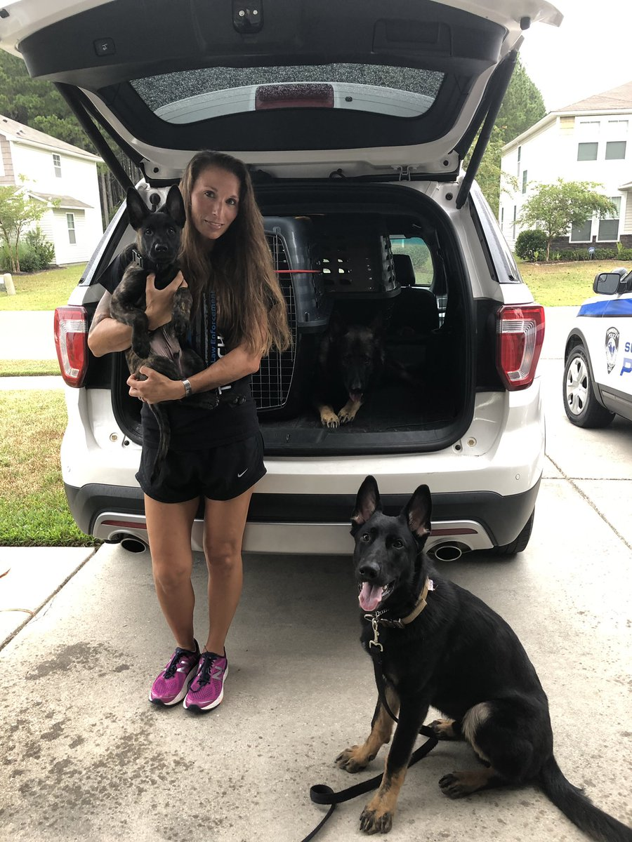 Have to document little man's first day of official training! Lincoln and Apart know what time it is and wanted no part of pictures. #gsd #k9 #workingdog #puppy #dutchshepherd #trainingday #letsgo #k9apart #livepd #livepdnation<br>http://pic.twitter.com/cKPqqeeITa