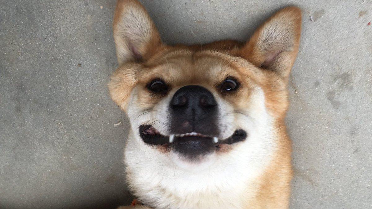 笑顔が怖い犬