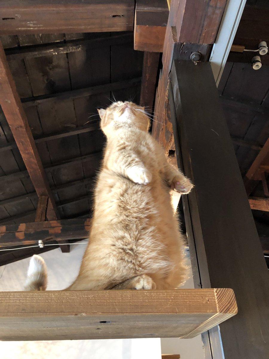 今朝、ウニちゃんの中の人が猫に変身する瞬間を捉えたのでご覧ください。「変身ッ!」