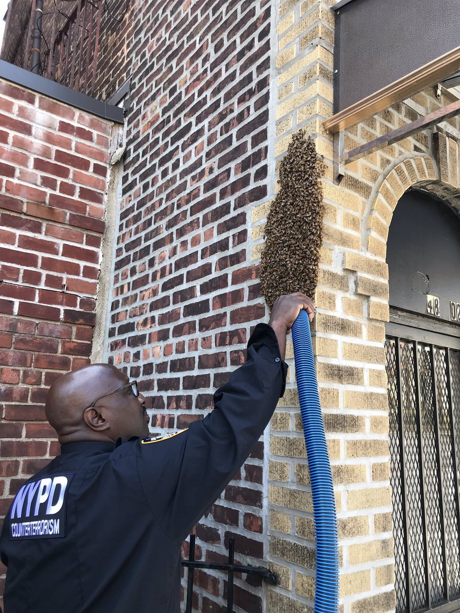 This #NationalHoneybeeAwarenessDay we'd like to recognize and thank our @NYPDBees beekeepers who choose to care for our city's bees, conducting sting operations in all five boroughs just for the love of it.   (We hear the honey isn't half bad either) 🐝🍯