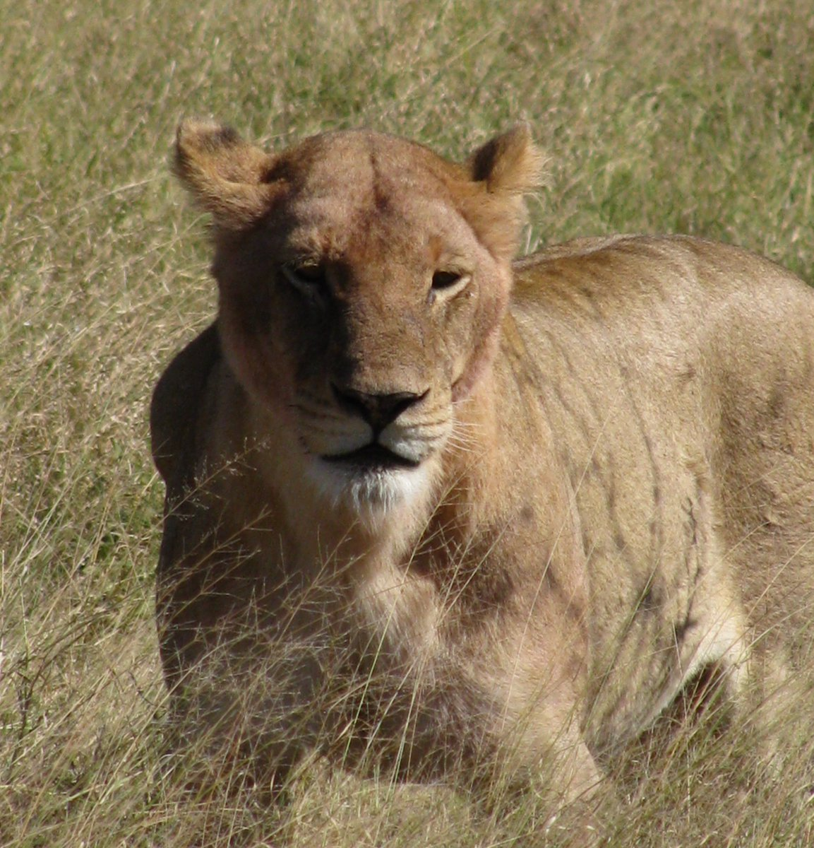 #SaturdayMotivation #SaturdayMotivation   There is simply nowhere in the world to equal Kruger National Park. When you visit you'll see why... <br>http://pic.twitter.com/mNnppjgQAz