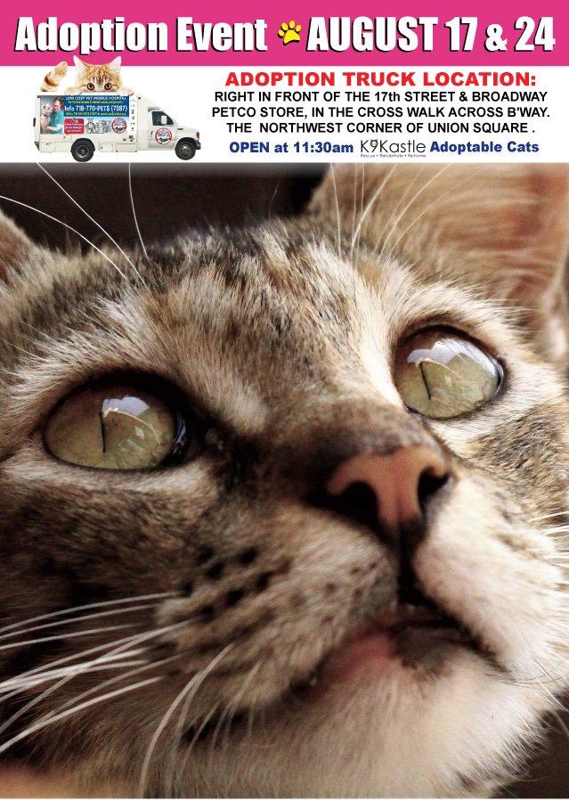 book Infortúnios Trágicos da