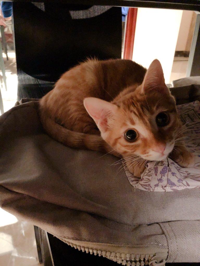 August 18 is my 4 months birthday 🎂! I think I'm still a baby cat! 🐱 #catboxsunday #AdoptDontShop