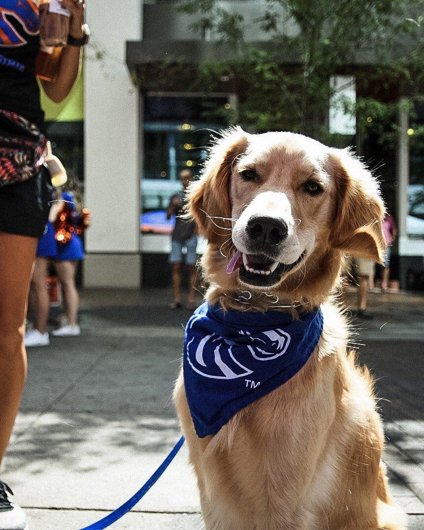 Bronco Nation has the goodest dogs    #BleedBlue<br>http://pic.twitter.com/IOPZEAMoZU – à Boise's Farmer's Market