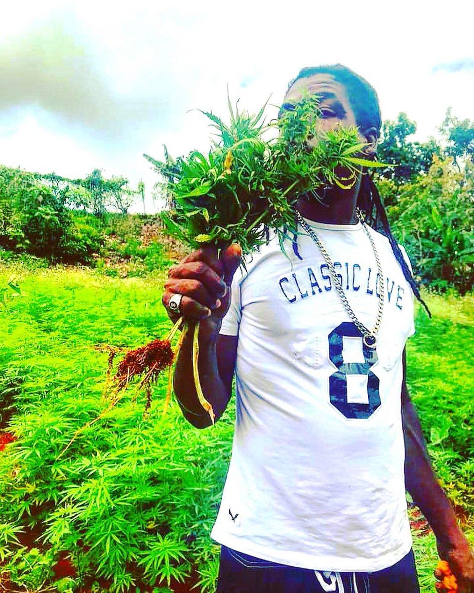 HotBox Jamaica (@HotBoxJA) | Twitter