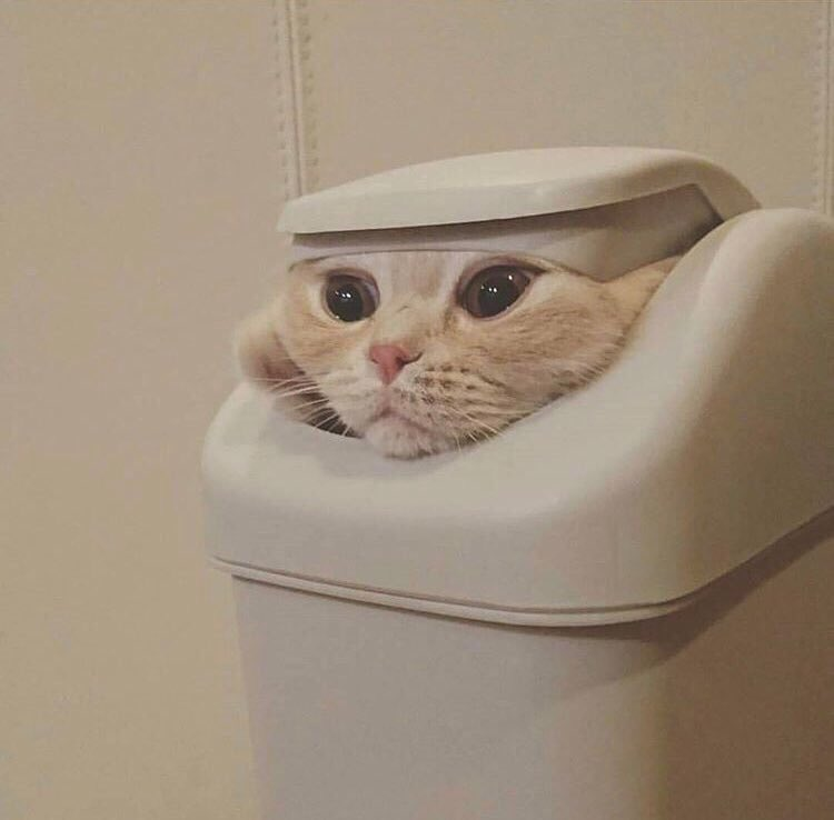 """""""tell cersei it was me"""" cat memes are the best thing that came out of game of thrones <br>http://pic.twitter.com/xSKZZ6m42P"""