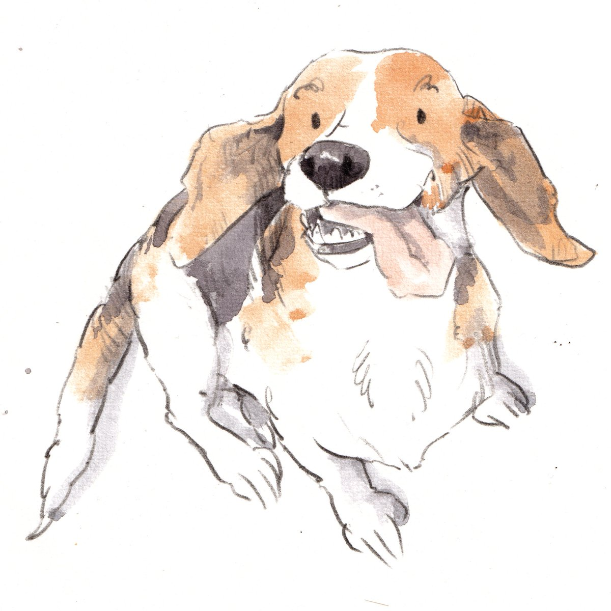 Hooray for Saturday!! How is your weekend going so far, lovely people and lovely dogs!! I really hope that you have had a fabulous and adventurous day. #hoorayfordogs #beagle #weekend<br>http://pic.twitter.com/B9pZ0UMmY0