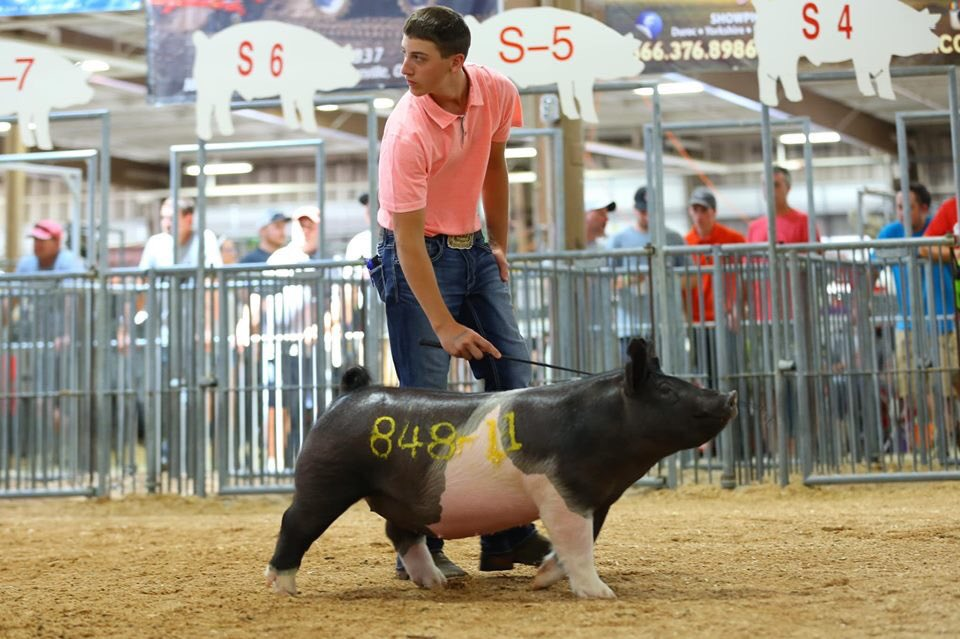 GRAND CHAMPION BREEDING GILT 2019 Henry County Open Show, OH Sired by :: KEEP EM GUESSIN Raised by :: Heins Showpigs, OH #SG19<br>http://pic.twitter.com/MdTRZwm0ym