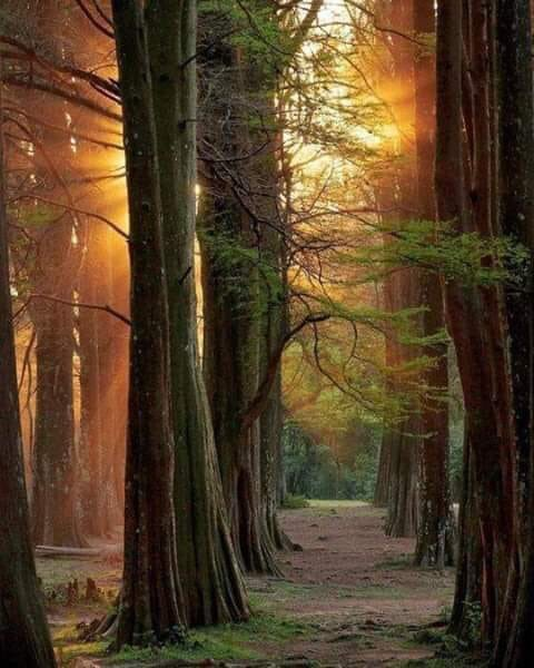 The clearest way into the universe is through a forest wilderness. ~John Muir