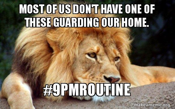 We'd be lion if we said the #9pmroutine didn't work. We have stats that say it does