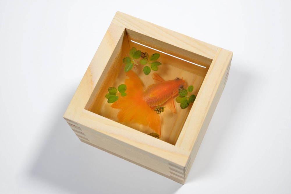 すみだ水族館「金魚♡(LOVE)展」水彩画やフェルト作品など金魚アートに彩られる展示エリア -