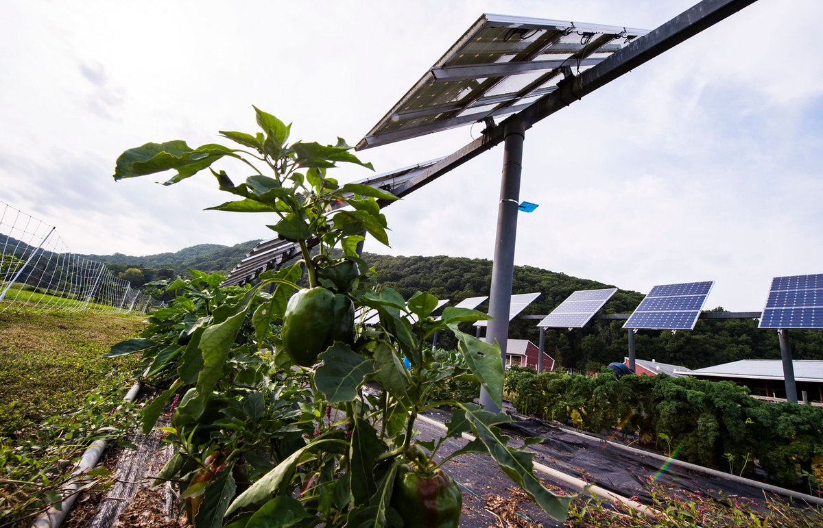 Putting solar panels on less than 1 percent of the world's agricultural land could produce enough energy to fulfill global electricity demand, according to a recent study. e360.yale.edu/digest/solar-p…