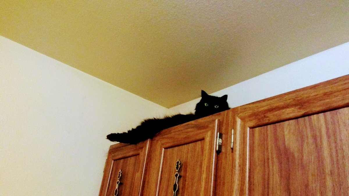 @thechrisbarron Uhm... What?..... Its #Caturday & #BlackCatAppreciationDay !