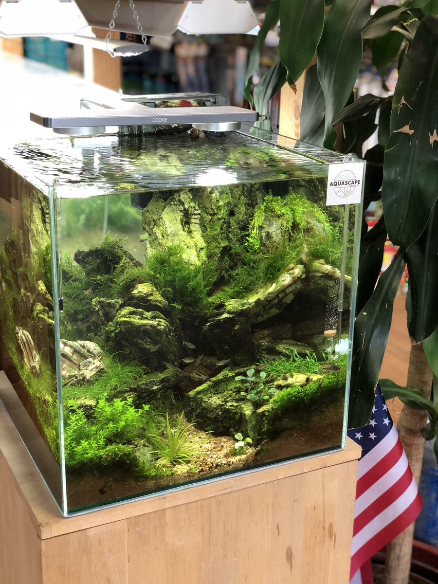 Pet Zone Tropical Fish On Twitter Added Some New Plants And Fish To One Of Our Cube Aquascapes