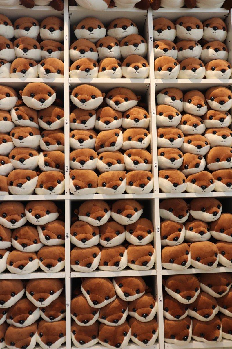 桂浜水族館 公式さんの投稿画像