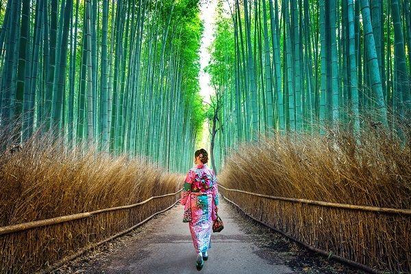 嵯峨野の竹林(京都)