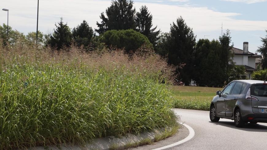 Gli sfalci del verde non sono sufficienti: l'erb...