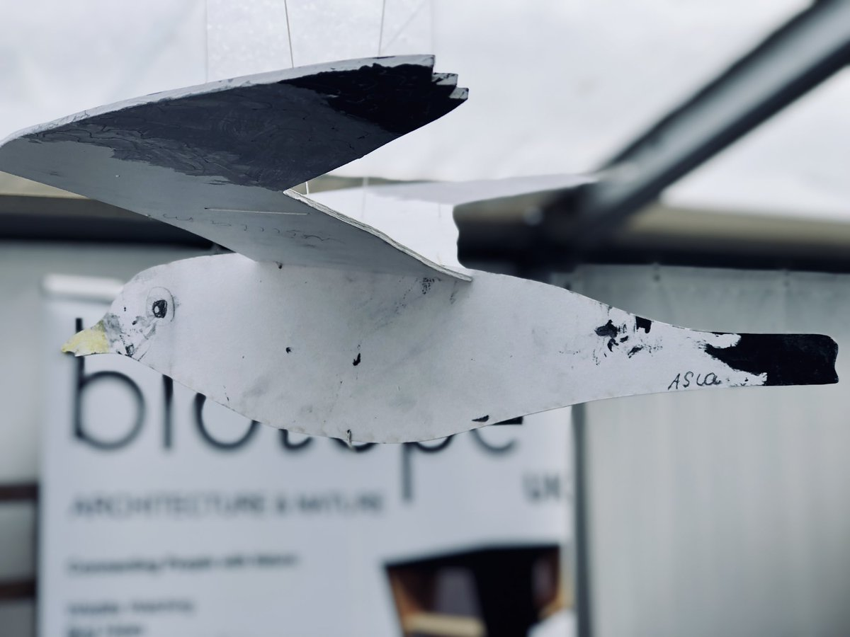 The #kittiwakes are still flying above the Biotope stand in marquee 5 on the final day of #Birdfair2019 come say hi if you like cool #birding #architecture &/or get along to Tormod's @BiotopeOffice talk at 1100 in the Hobby tent 👍🏻