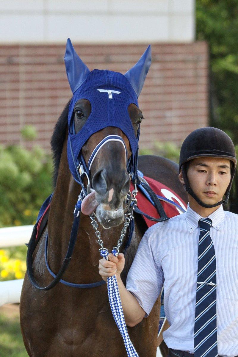 フィエールマン 初めて見たけど、かなりテンションの高い馬ですね💦💦💦 舌ペロの可愛い写真をパシャリ 3着に敗れはしましたけど、 凱旋門賞ではぜひ頂点を!  #フィエールマン #クリストフ・ルメール