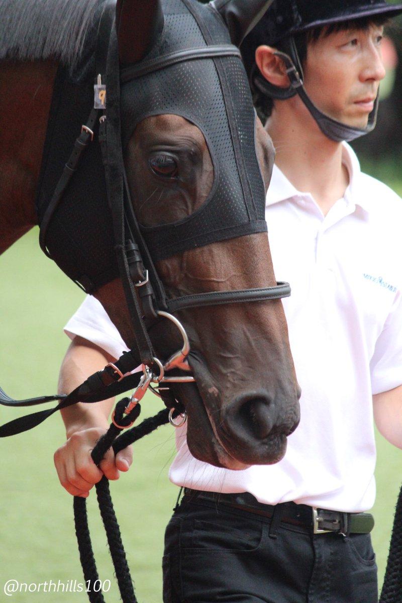 2019/8/18 小倉5R 2歳新馬  シャンドフルール 武豊  見事新馬勝ち!豊さんはキズナ産駒では、これが初勝利になりました。ノースヒルズの馬で勝ってくれたのが更に嬉しいです。 大きいとこ目指しましょう!